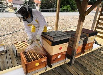 Nová včelstva v Centru Kosatec