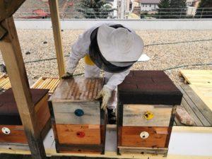 Péče o včelstvo v Integračním Centru Kosatec