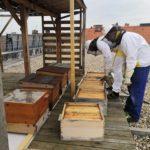 O včely se v Kosatci staráme denně